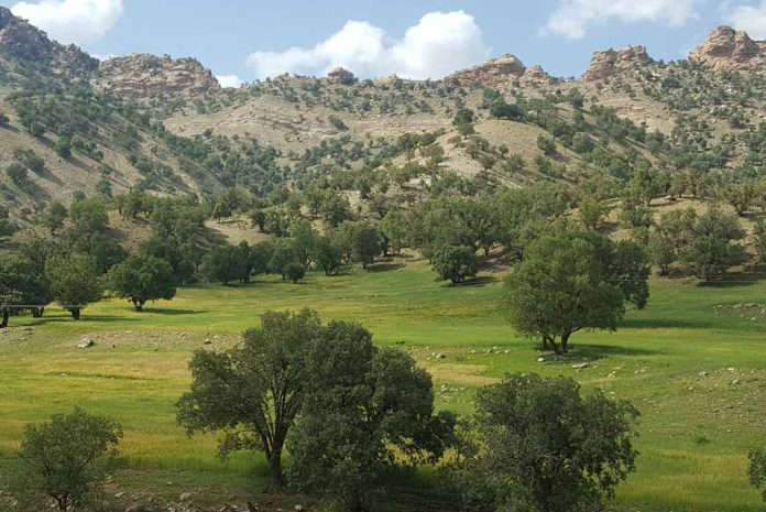 The open, semi-arid forests of Iran's Zagros region