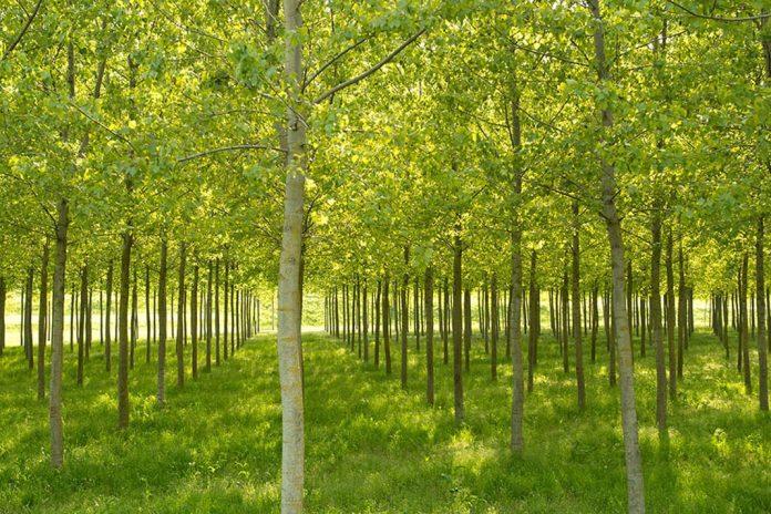 italian forestry strategy