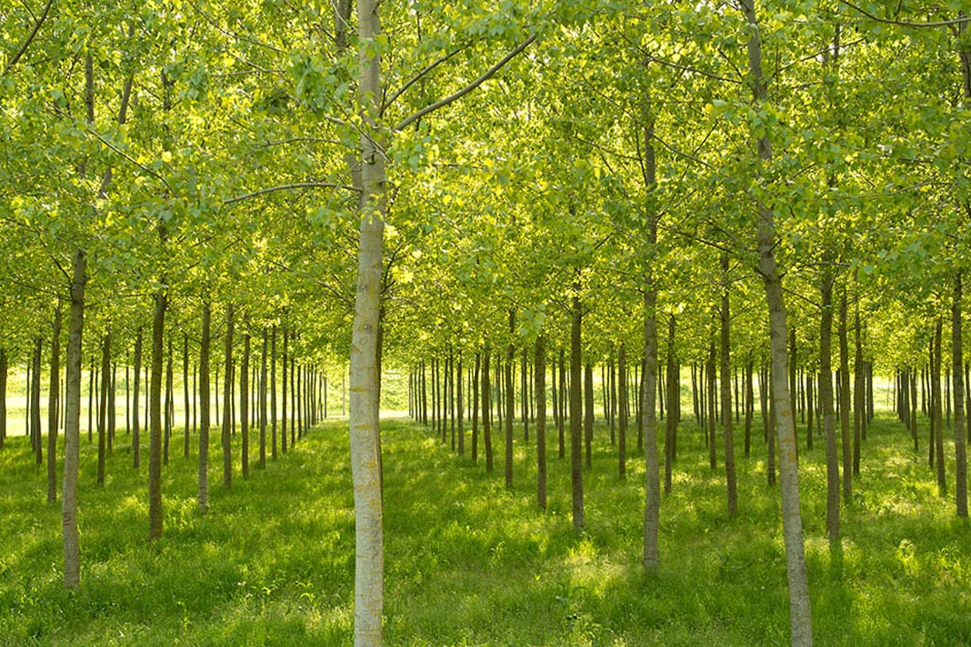 First meeting to develop the Italian National Forestry