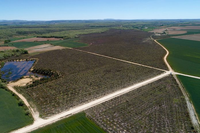 Land Life Company boosts reforestation in the Mediterranean
