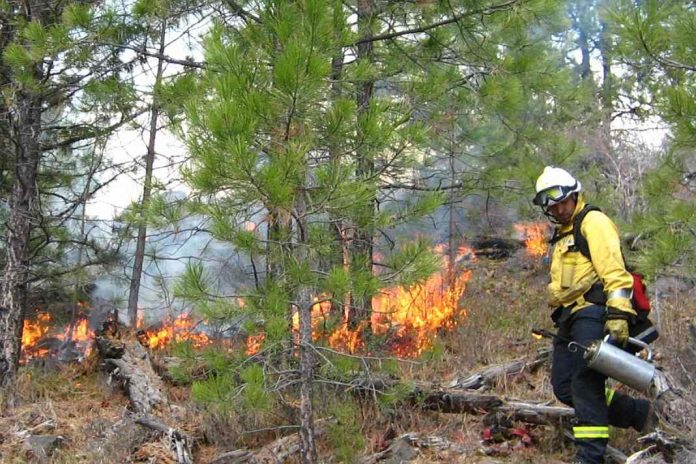 Firefighter managing prescribed burn