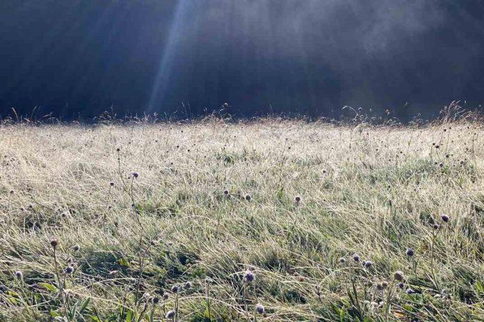 A frozen meadow full of wildflowers.