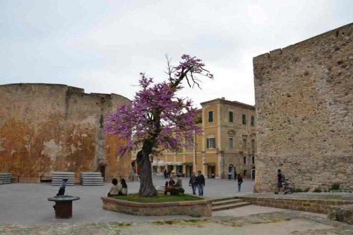 Tree in urban area
