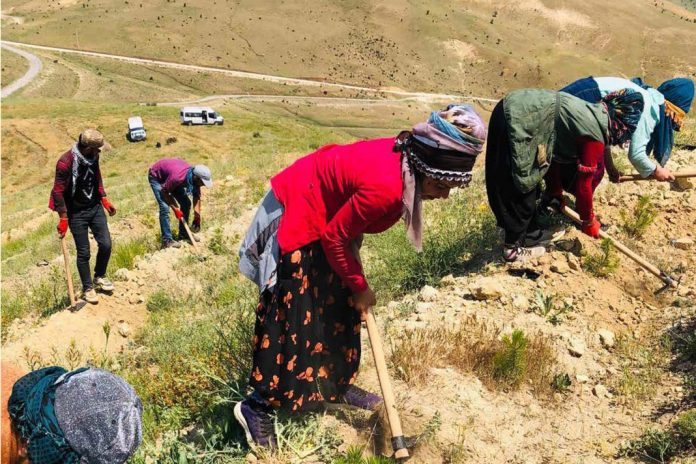 Planting seedlings; natural strong species are planted in the forestry areas by local people.