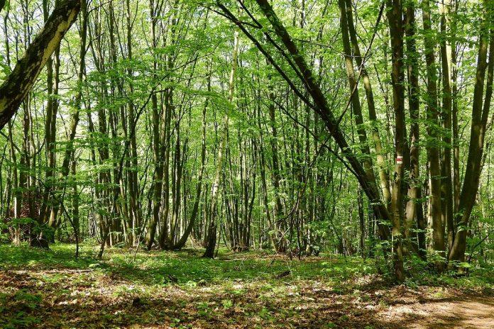 Coppice forest. Photo: Markéta Machová / Pixabay