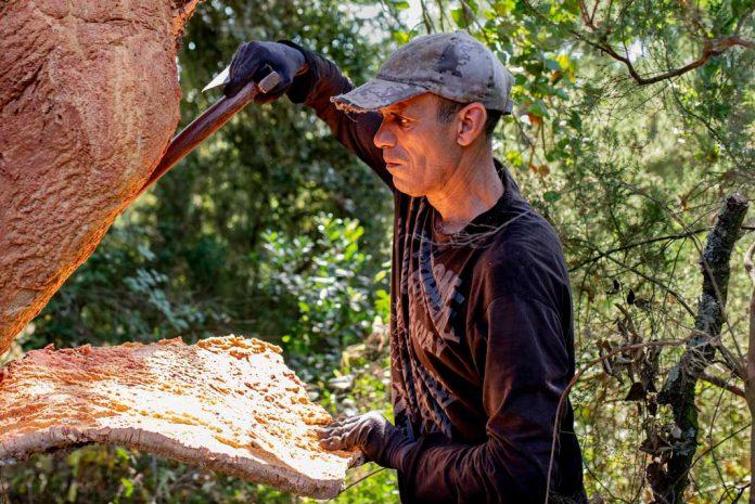 forest worker harvesting cork