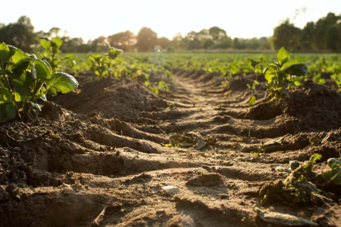 soil farmland ecosystem services EU